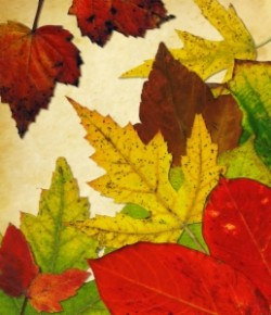 Autumn/ Winter Breaks