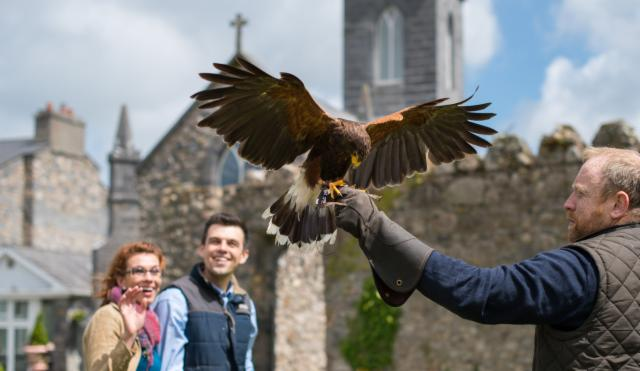Fantastic Falconry Package