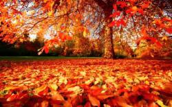 Autumn Room Sale