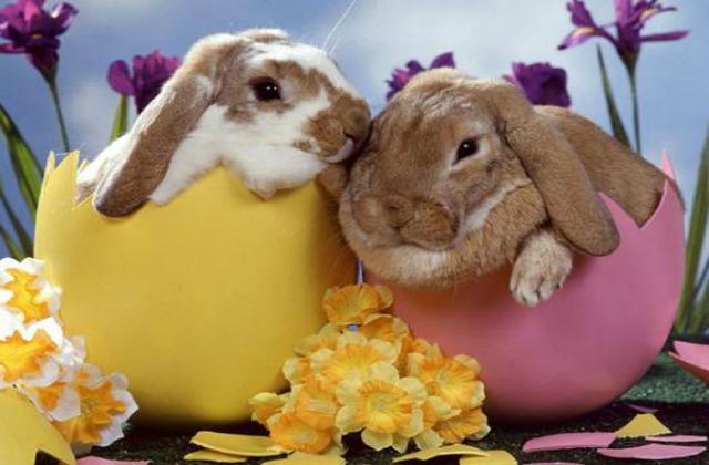 Easter 1 Night Offer
