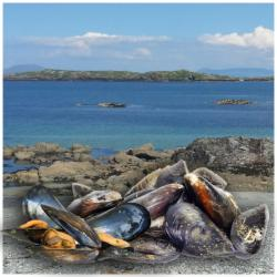 Connemara Mussel Festival on the Wild Atlantic Way 28th-30th April 2017