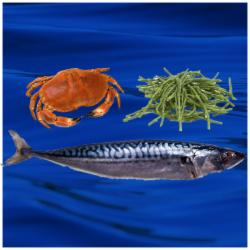 Seafoods of the Wild Atlantic Way 22nd - 24th April