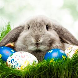 Easter in Vienna à partir de €99.50. Réservez